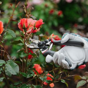 Градинарска ножица за рози и храсти